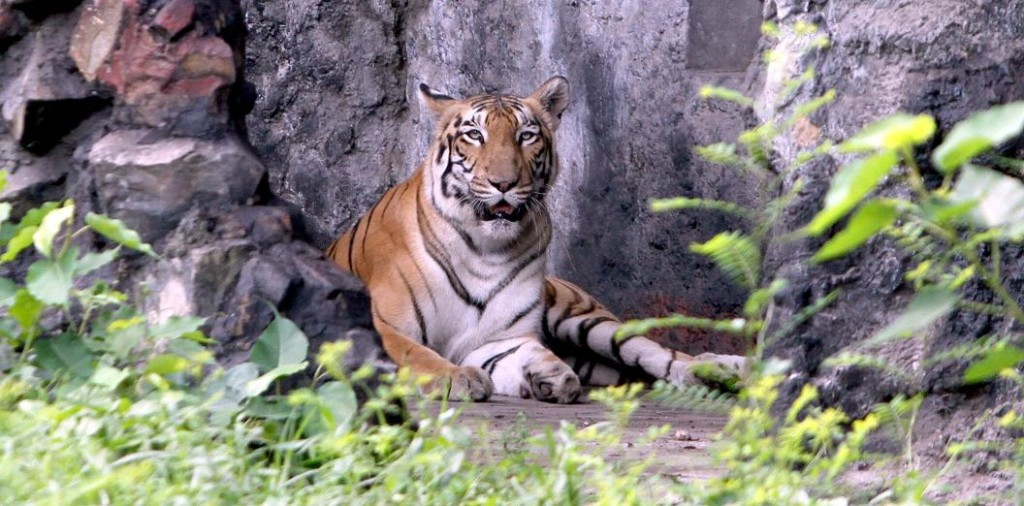 kolkata alipore zoo