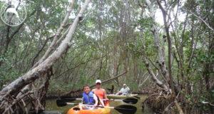 Mangrove Kayak Tour Sarasota